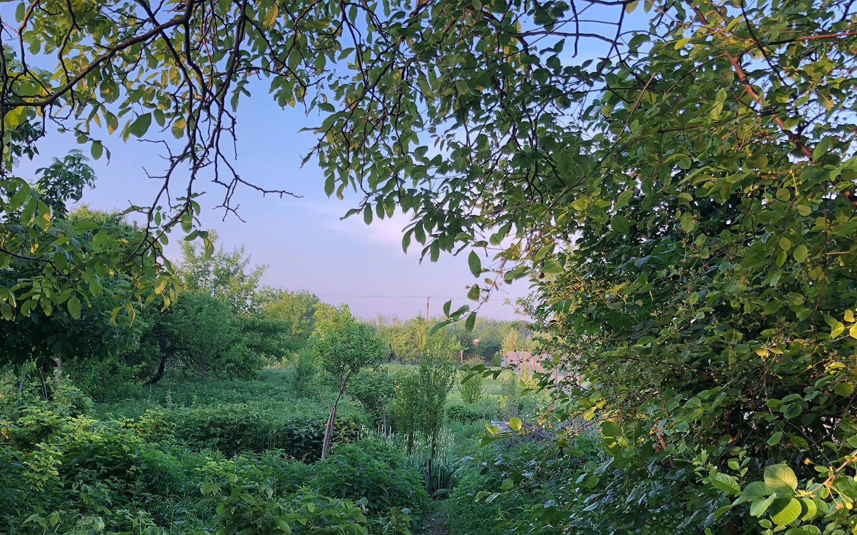 foto zahrada